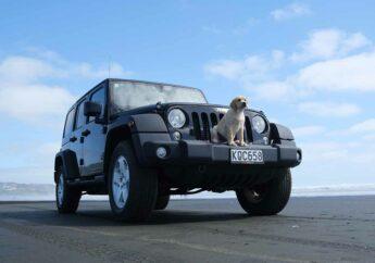 Wenn's müffelt: So wirst du Hundegeruch im Auto los